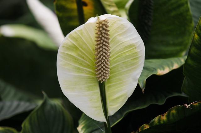 Top pět květin pro stinná zákoutí