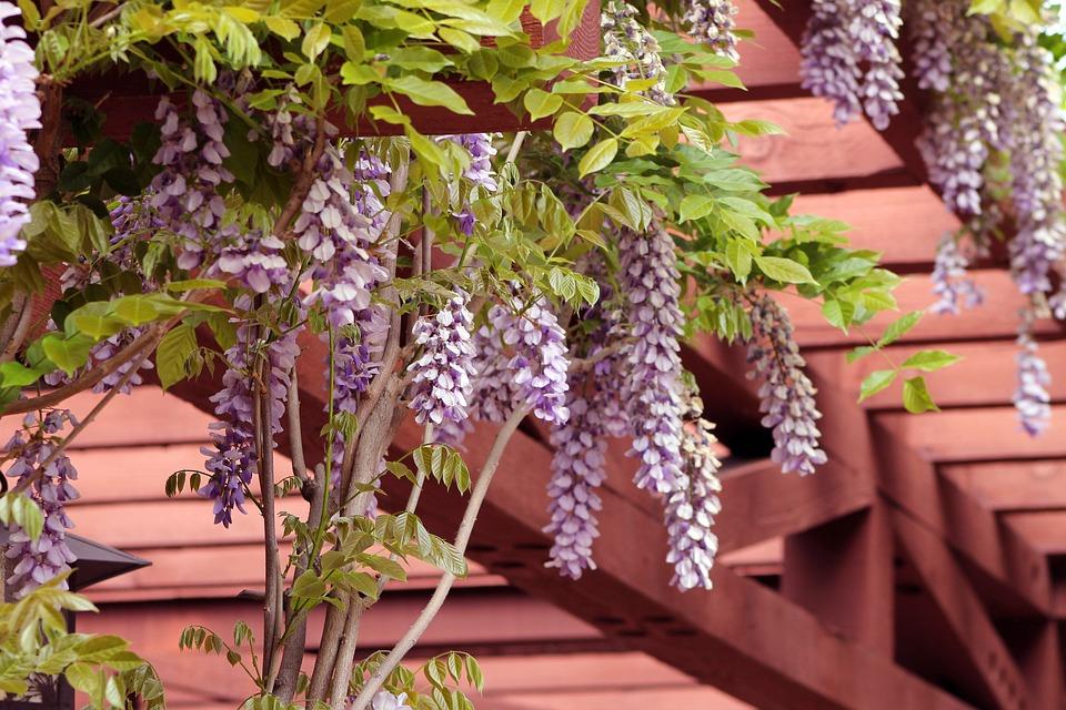 U dřevěných pergol záleží i na barvě samotné konstrukce